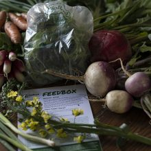 Greens, beans and teaming up with good folk from BioBag