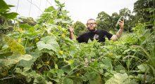 Matt and the cucumbers