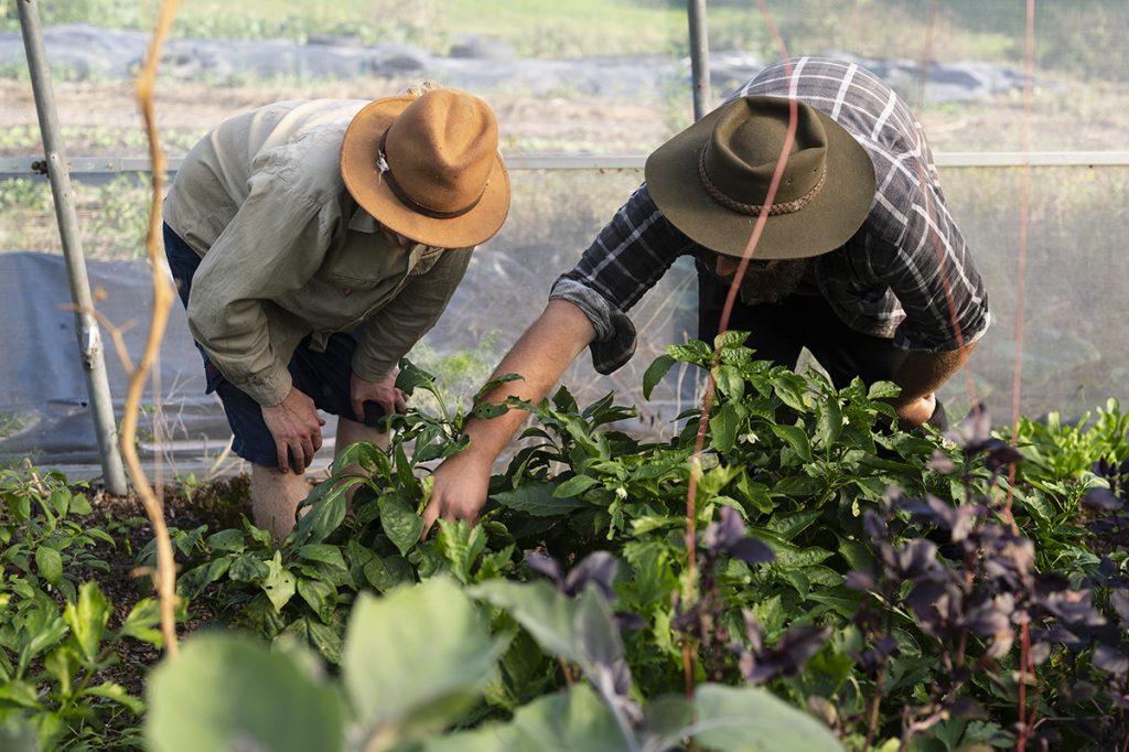 volunteer on an urban farm