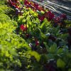 Autumn light and seasonal produce in Newcastle